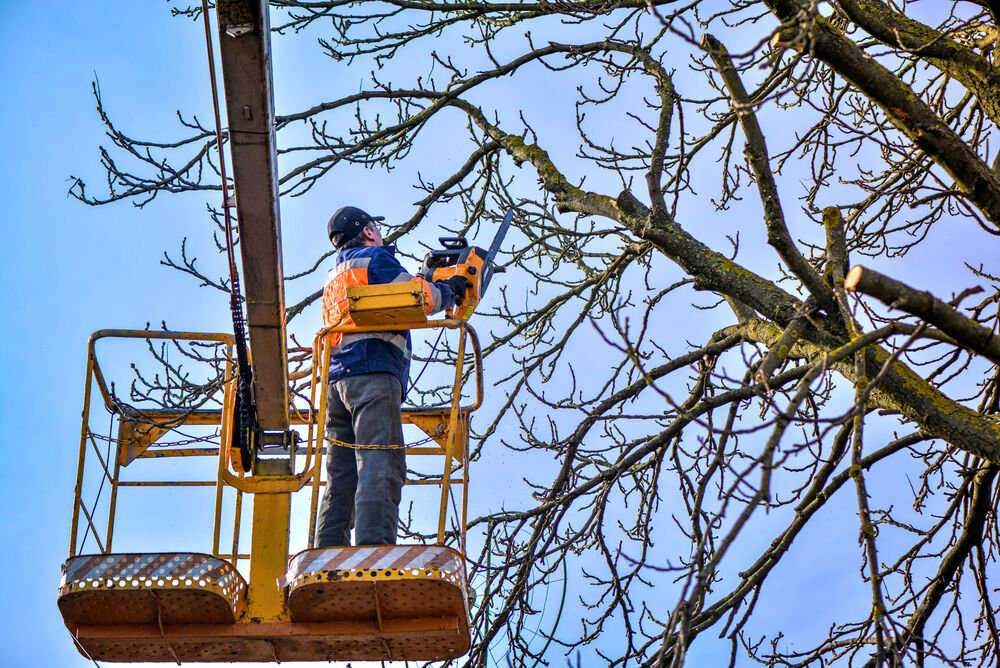 Tree Pruning, Nationwide Tree Service